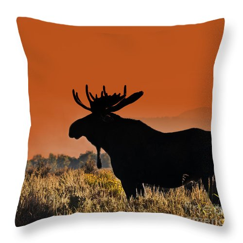 Moose Throw Pillow featuring the photograph Bull Moose Sunset by Timothy Flanigan and Debbie Flanigan Nature Exposure