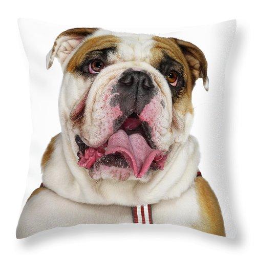 Pets Throw Pillow featuring the photograph Bulldog by Gandee Vasan