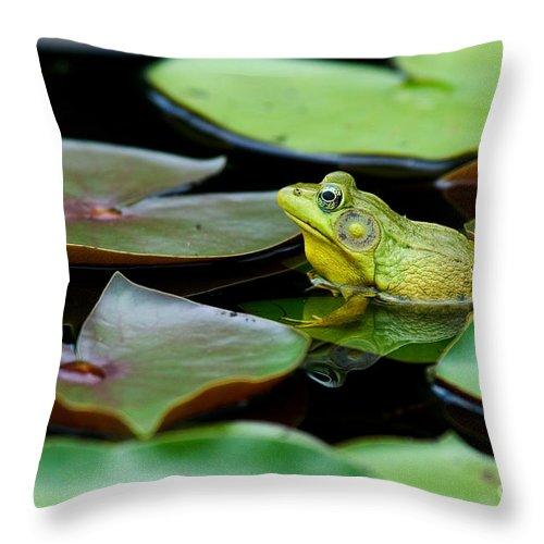 Animal Throw Pillow featuring the photograph Bullfrog by Jim Zipp