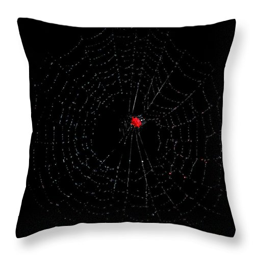 Spider Throw Pillow featuring the photograph Bulls-eye by Lucy VanSwearingen