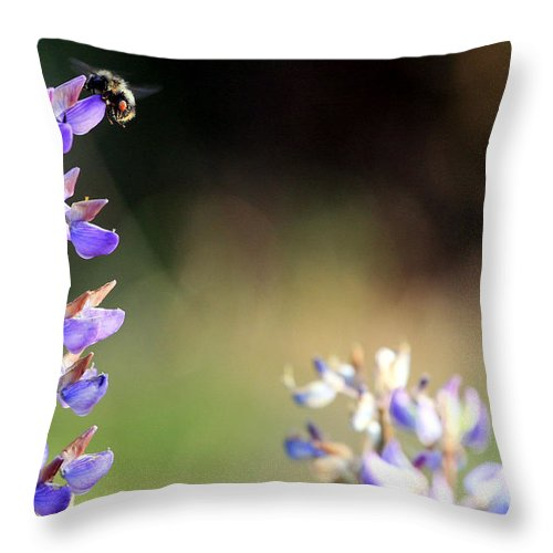 Botanical Throw Pillow featuring the photograph Bumble Bee On Lupine by Rich Collins