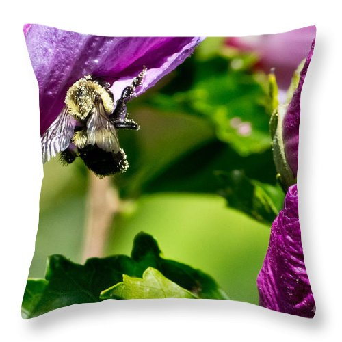 Insect Throw Pillow featuring the photograph Bumble Bee Vii by Ms Judi