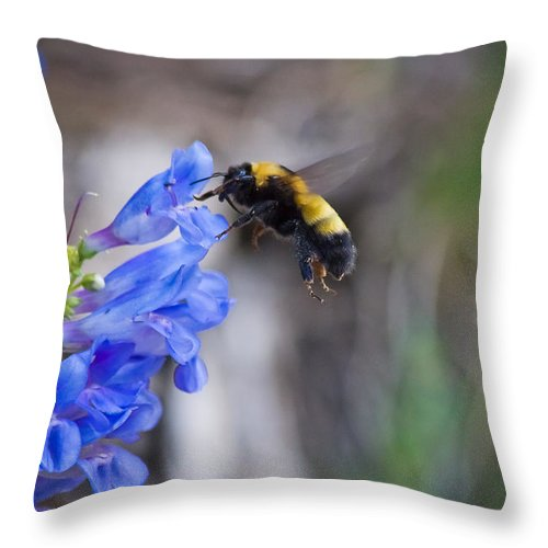 Horizontal Throw Pillow featuring the photograph Bumble Blue - Casper Mountain - Casper Wyoming by Diane Mintle