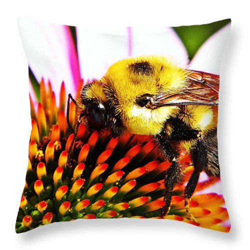 Bee Throw Pillow featuring the photograph Bumblebee On Echinacea by Chris Berry