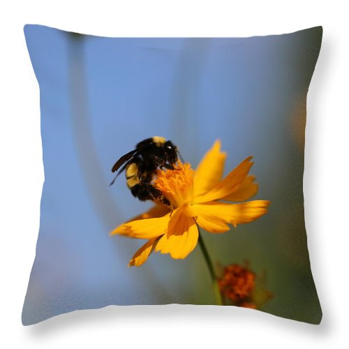 Wildflower Throw Pillow featuring the photograph Bumblebee On Yellow Flower by Gary Blair
