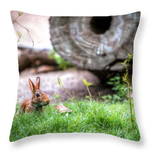 Log Throw Pillow featuring the photograph Bunny In The Grass by Tim Stanley