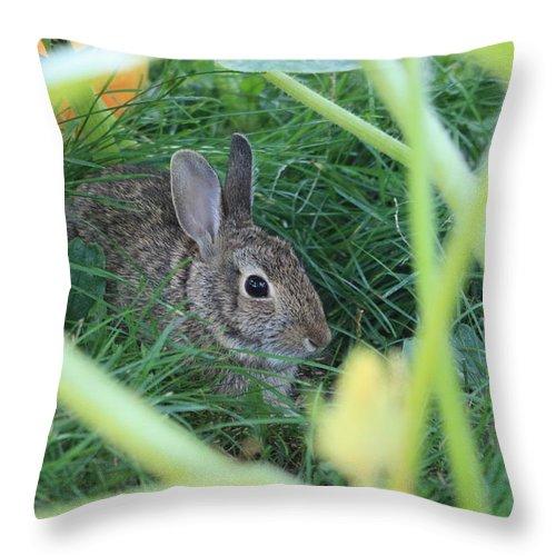 Rabbit Throw Pillow featuring the photograph Bunny Rabbit by Amanda Stadther