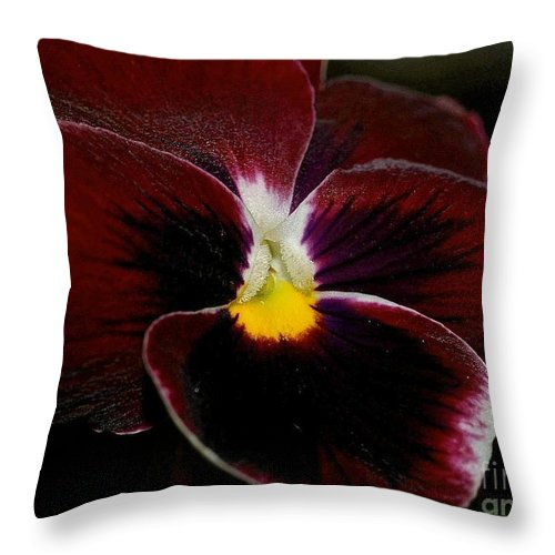 Pansy Throw Pillow featuring the photograph Burgundy Pansy by Lisa Telquist
