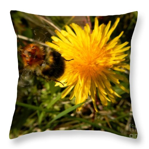 Spring Throw Pillow featuring the photograph Bussy Bee And Dandelion by Loreta Mickiene