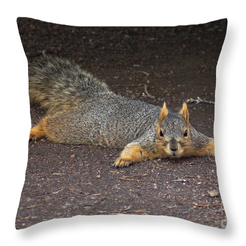 Squirrel Throw Pillow featuring the photograph Busted by Lori Tordsen