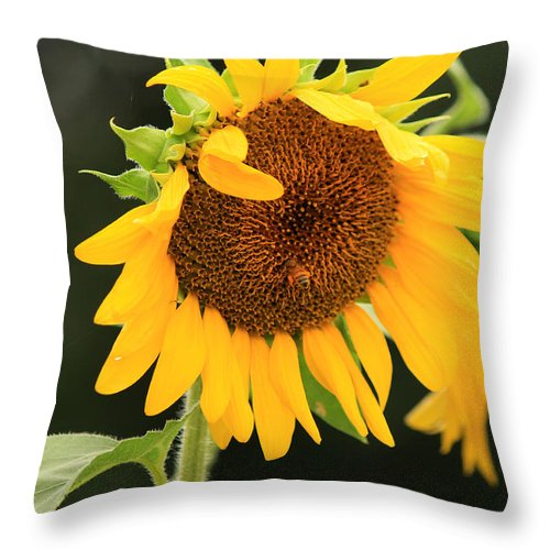 Sunflowers Throw Pillow featuring the photograph Busy Bee by Amy Warr