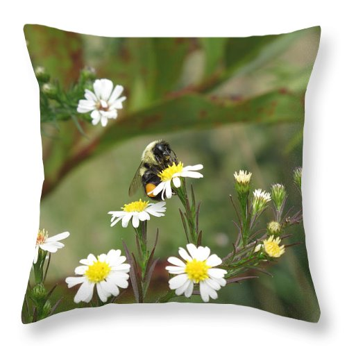 Bee Throw Pillow featuring the photograph Busy Bee by Barbara McDevitt