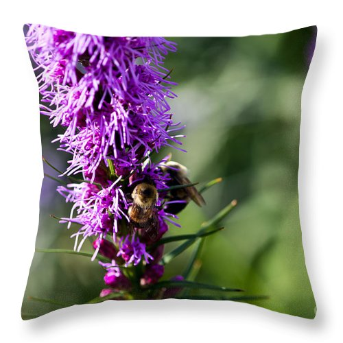 Bee Throw Pillow featuring the photograph Busy Bees by Ms Judi