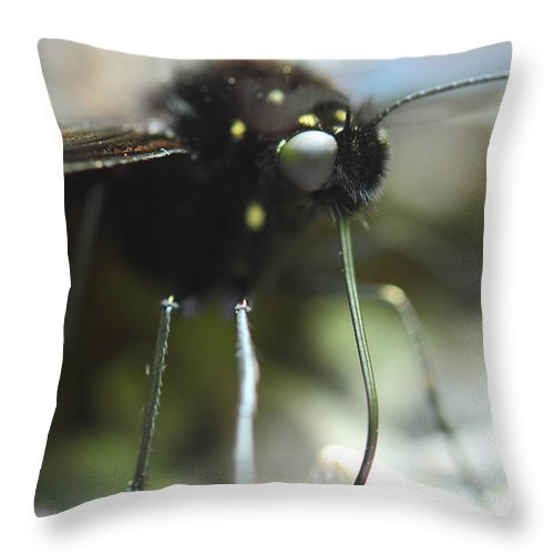 Butterfly Throw Pillow featuring the photograph Busy Butterfly by Michael Eingle