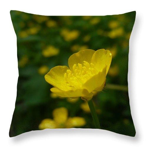 Buttercup Throw Pillow featuring the photograph Buttercup  by Nicki Bennett