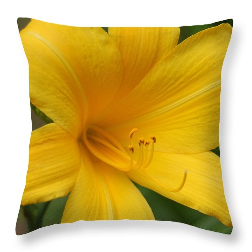 Yellow Throw Pillow featuring the photograph Buttered Popcorn by Suzanne Gaff