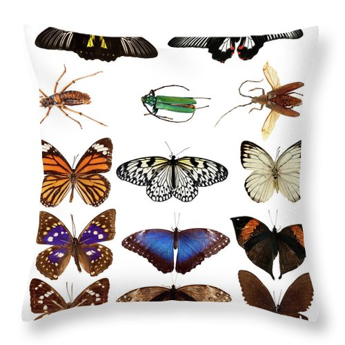 Common Blue Butterfly Throw Pillow featuring the photograph Butterflies And Beetles by Mashabuba