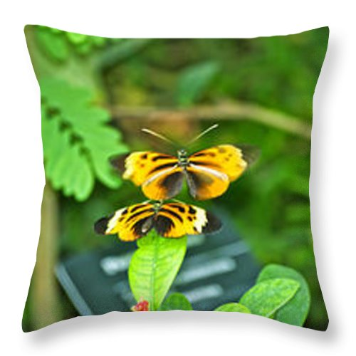 Il Throw Pillow featuring the photograph Butterflies Gentle Courtship 3 Panel Composite by Thomas Woolworth