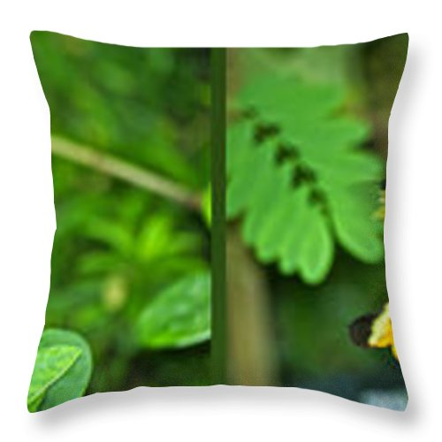 Composite Throw Pillow featuring the photograph Butterflies Gentle Courtship 4 Panel Composite by Thomas Woolworth