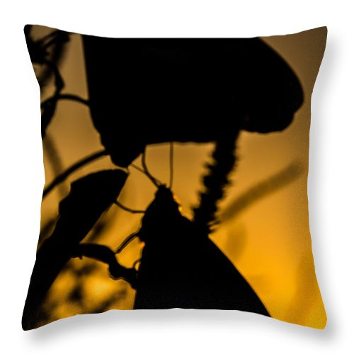 Jay Stockhaus Throw Pillow featuring the photograph Butterflies by Jay Stockhaus