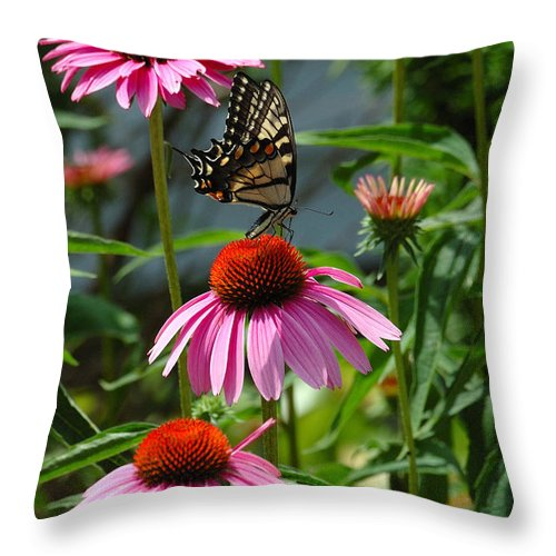 Yellow Throw Pillow featuring the photograph Butterfly 1 2013 by Edward Sobuta