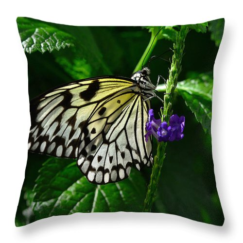 Photo Throw Pillow featuring the photograph Butterfly 10 by Dragan Kudjerski