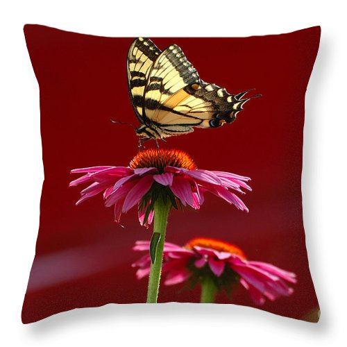 Yellow Butterfly Throw Pillow featuring the photograph Butterfly 3 2013 by Edward Sobuta