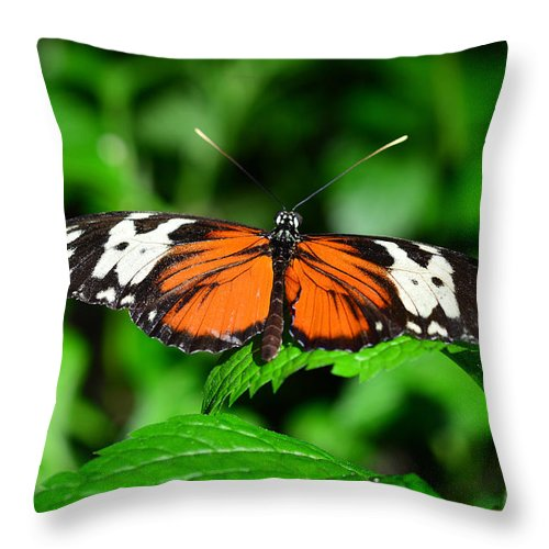 Butterfly Throw Pillow featuring the photograph Butterfly 5 by Dragan Kudjerski