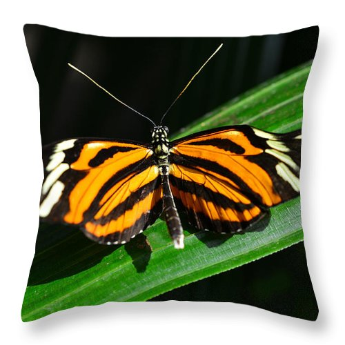 Photo Throw Pillow featuring the photograph Butterfly 7 by Dragan Kudjerski
