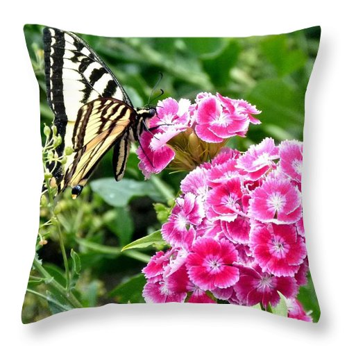 Butterfly Throw Pillow featuring the photograph Butterfly And Sweet Williams by Will Borden