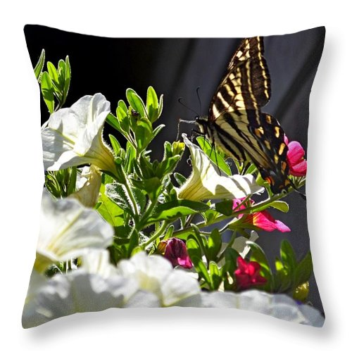 Butterfly Throw Pillow featuring the photograph Swallowtail Butterfly On White Petunia Flower by Lena Photo Art
