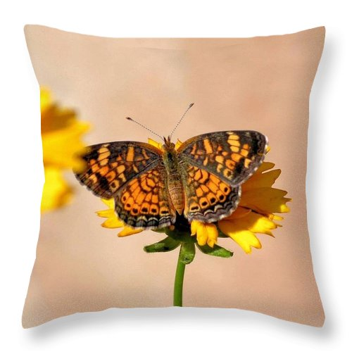 Butterfly Baby Throw Pillow featuring the photograph Butterfly Baby by Maria Urso