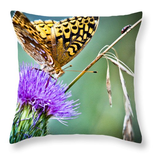 Great Spangled Fritillary Butterfly Throw Pillow featuring the photograph Butterfly Beauty And Little Friend by Cheryl Baxter