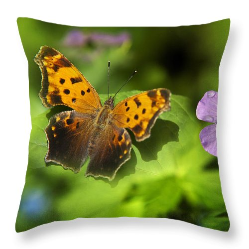 Butterfly Throw Pillow featuring the photograph Butterfly Garden by Christina Rollo