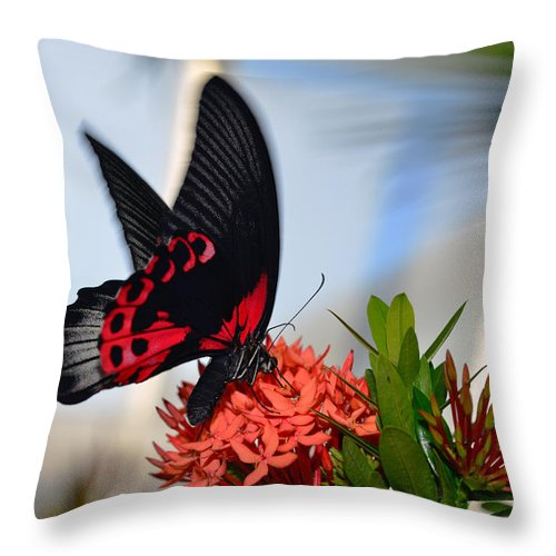 Photo Throw Pillow featuring the photograph Butterfly In Action by Dragan Kudjerski