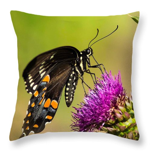 Butterfly Throw Pillow featuring the photograph Butterfly In Nature by Daren Johnson
