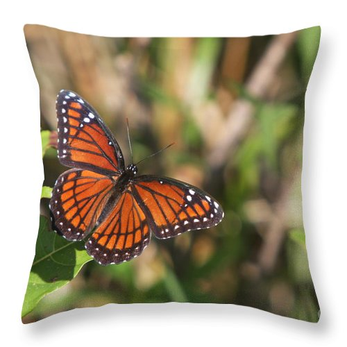 Butterfly Throw Pillow featuring the photograph Butterfly In The Everglades by Christiane Schulze Art And Photography