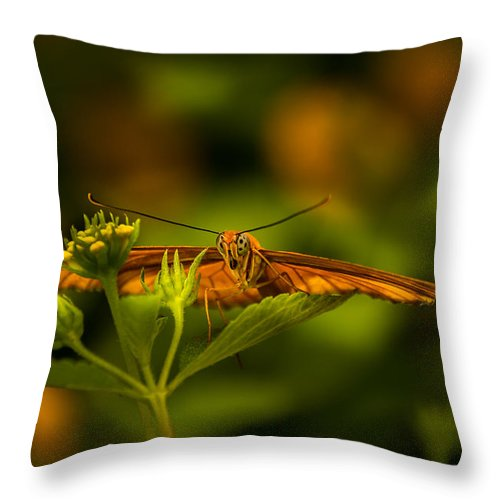 Jay Stockhaus Throw Pillow featuring the photograph Butterfly by Jay Stockhaus