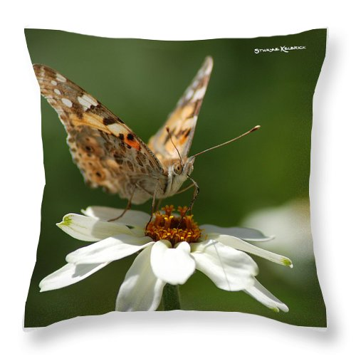 Butterfly Throw Pillow featuring the photograph Butterfly Macro Photography by Stwayne Keubrick