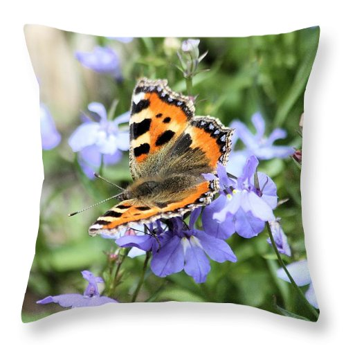 Butterfly Throw Pillow featuring the photograph Butterfly On Blue Flower by Gordon Auld