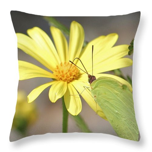 Butterfly Throw Pillow featuring the photograph Butterfly On Daisy by Cynthia Guinn