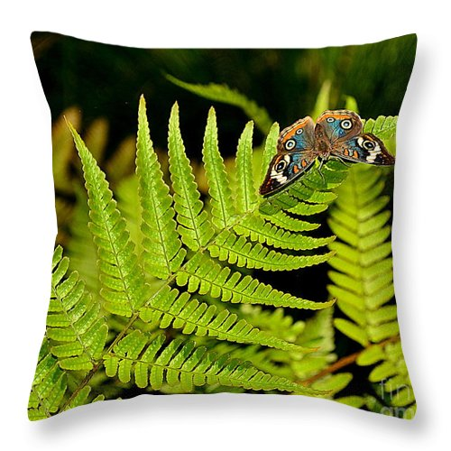 Butterfly Throw Pillow featuring the photograph Butterfly On Fern by Amy Lucid