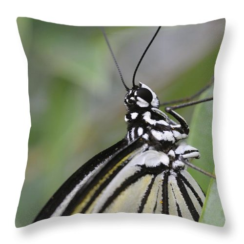 Butterfly Throw Pillow featuring the photograph Butterfly by Jenny Potter