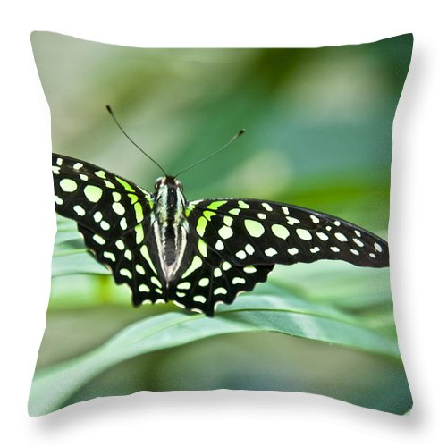 Butterfly Throw Pillow featuring the photograph Butterfly Resting Color by Ron White