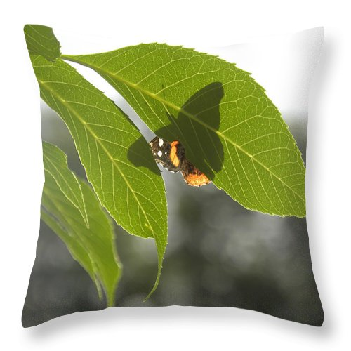 Butterfly Throw Pillow featuring the photograph Butterfly Shadow by Sheri Lauren
