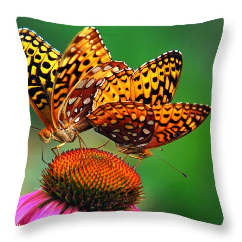 Butterflies Throw Pillow featuring the photograph Butterfly Twins by Christina Rollo
