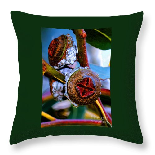 Trees Throw Pillow featuring the photograph Pacific Northwest Washington Button Seed Pod by Tap On Photo