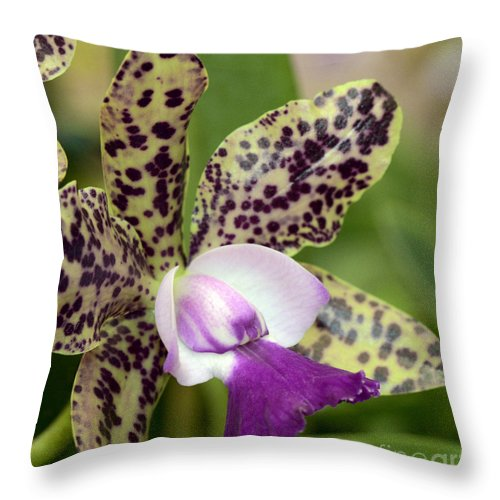 Orchid Throw Pillow featuring the photograph C. Green Emerald 'queen' Macro by Terri Winkler