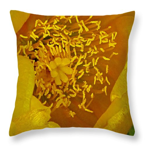 Cactus Throw Pillow featuring the photograph Cactus 2 by Ingrid Smith-Johnsen