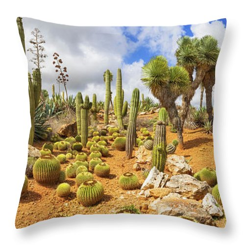 Saguaro Cactus Throw Pillow featuring the photograph Cactus Country by Cinoby
